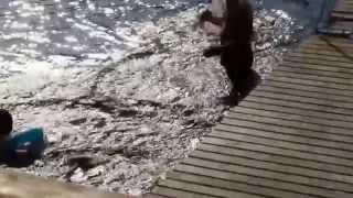 フィンランドの湖で泳いだよ(2014夏の思い出)