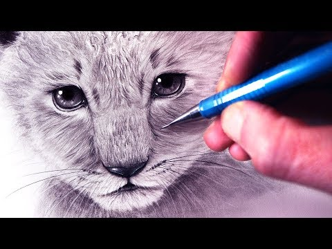 how-to-draw-a-lion-cub