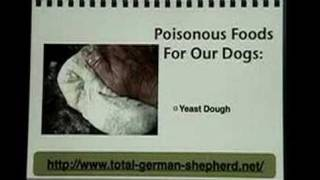 Poisonous dog foods for your German Shepherd