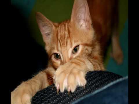 Вопрос: Как отучить кошку драть новые обои, только наклеили?