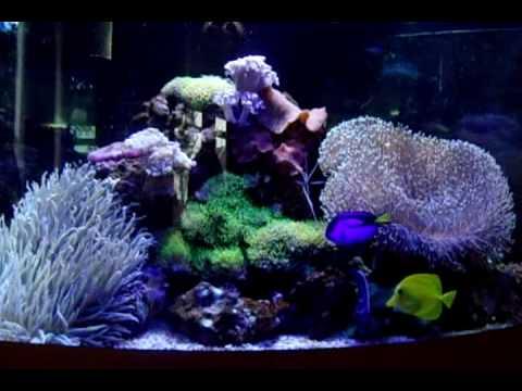 juwel trigon 190 marine tank coral reef   YouTube