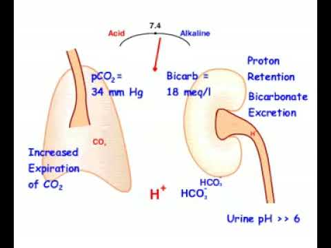 respiratory alkalosis compensated - youtube, Skeleton