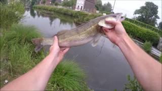 Pêche du Sandre et du Brochet au vif en canal !