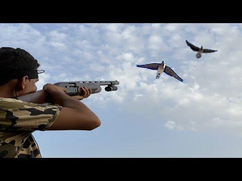 Chasse Tourterelles Des Bois – Dove Hunting – Cacería Tórtolas Part 1