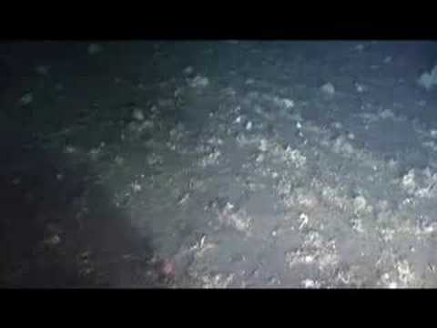 Moment of Discovery in the Bering Sea