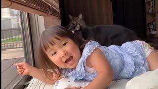 カラスの襲来に興奮する娘と猫たち ノルウェージャンフォレストキャット ラガマフィン Daughters and cats crazy about visiting crows