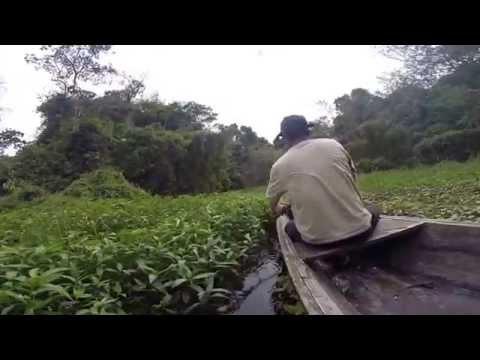Tapiche Reserve Amazone trekking (Iquitos Peru)