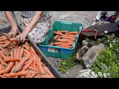 How I Store ROOT VEGETABLES (that Last Through The Winter!) | Market Garden | Grow GREAT Carrots!