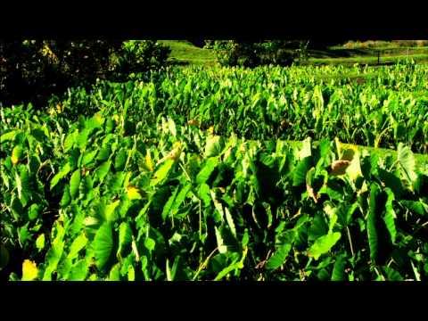 Kumukahi Sample Video: Kāne