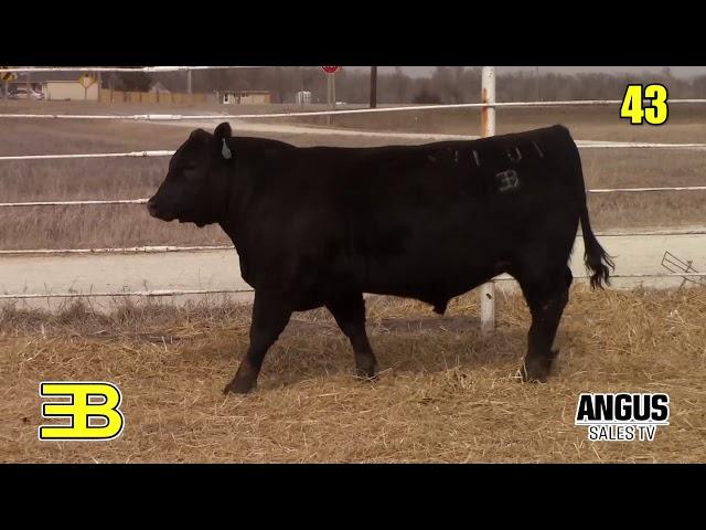 Benoit Angus Lot 43