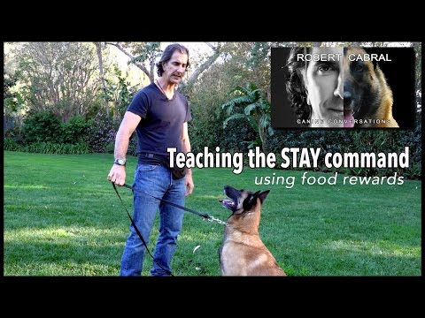 Teach Your Dog to  Stay pt. 1 Using Food - Robert Cabral Dog Training #9