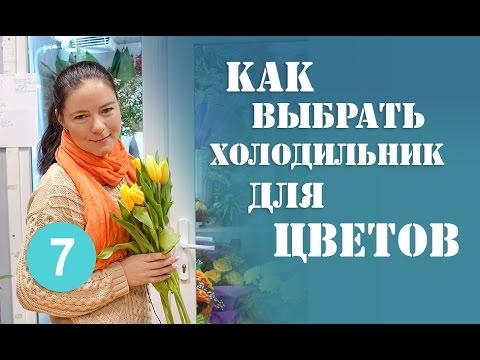 видео: Как Выбрать Холодильник Для Цветов! Холодильник Для Цветов.