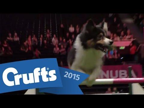Agility - Crufts Singles Heat - S/M/L (Jumping) | Crufts 2015
