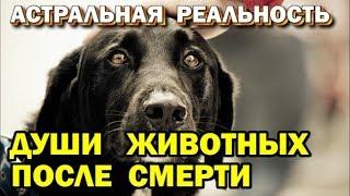 Душа животных после смерти. Возможна ли инкарнация животных. Астральная реальность