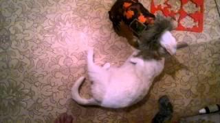 кота порвало от вида одетой собаки
