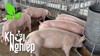 Giữ vững niềm tin - duy trì ý chí: Chăn nuôi lợn, ắt thành công - Khởi nghiệp 419 | VTC16