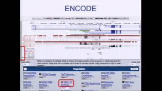 Visualizing ENCODE Data in the UCSC Browser - Pauline Fujita