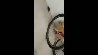 MEGA LUSTIGES KATZEN VIDEO - Katze fängt Maus oder Maus Fängt Katze?