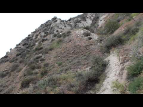 Simi valley california lion archery