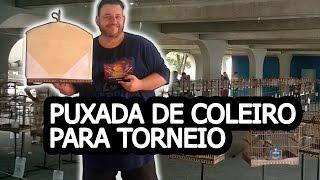 PUXADA DE COLEIRO PARA TORNEIO NA CAPA DUPLA   Mago dos Coleiros