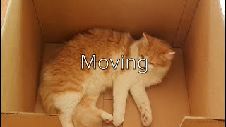 Moving with Pets - a How To Guide for a Less Stressful Move