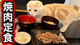 初めて焼肉定食を食べた猫の様子がこちらです