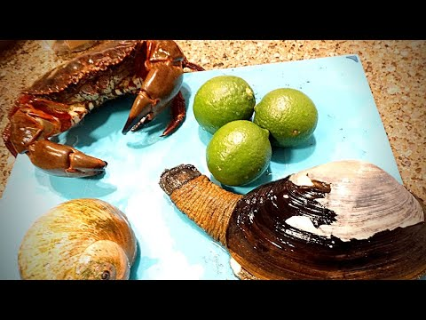 West Coast Seafood Foraging