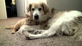 Живут, как кошка с собакой