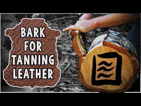 Natural Leather Tanning:  Collecting Tan Oak Bark for Vegetable Tanning Skins, bark tan
