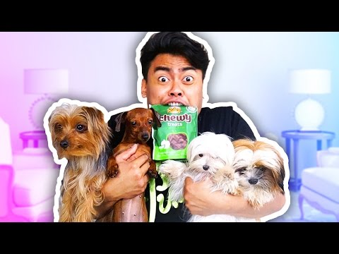 Thumbnail: EATING PUPPY SNACKS WITH PUPPIES CHALLENGE!