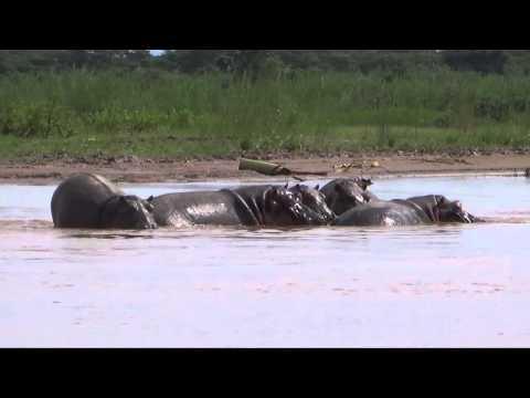 Visit Burundi: Rusizi National Park