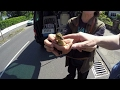 GoPro: Baby Duck Rescue with Stefan Bröckling