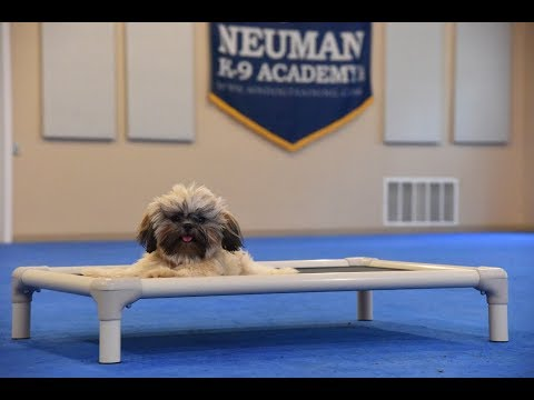 Mati (Shih Tzu) Boot Camp Dog Training Video Demonstration
