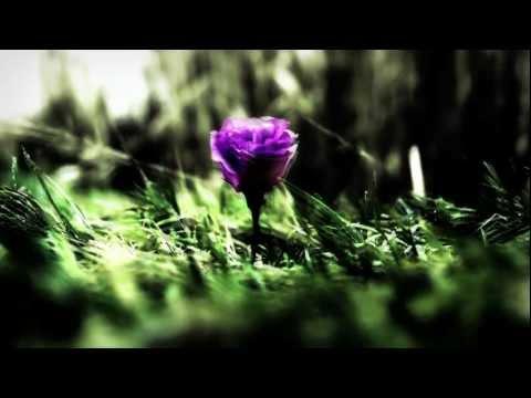 Enya - Sumiregusa (Wild Violet)