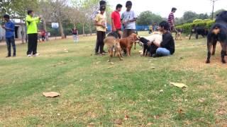 Dog park Hyderabad....!!!