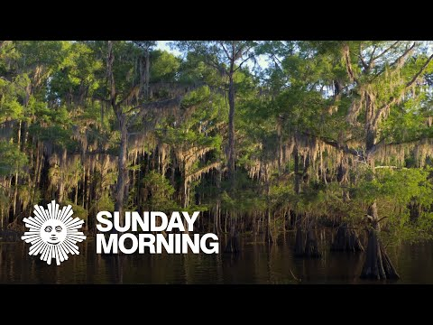 Nature: Caddo Lake