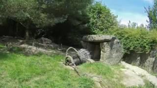 Visitamos el Parc Animalier de Sainte-Croix (Francia)