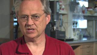 Producing sugar from photosynthetic bacteria