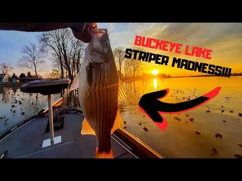 STRIPER MADNESS Aka Wipers At Buckeye Lake OHIO ( Awesome Ending!!!)