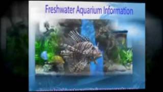 Freshwater Aquarium Information Thumbnail