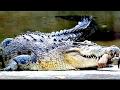 ANACONDA   La Gran Serpiente pelicula completa en español   cocodrilo gigante   película de horror
