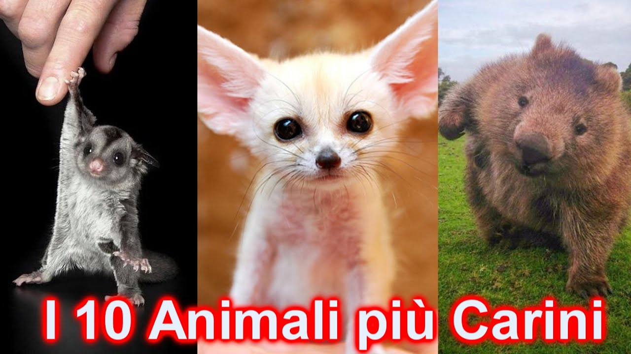 10 strani animali domestici super dolci e coccolosi youtube