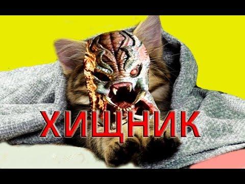 ХИЩНИК  2018 - ОБЗОР ФИЛЬМА