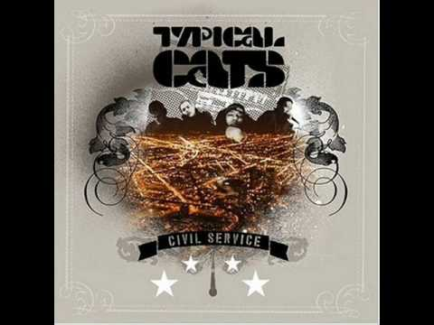Typical cats - Any day
