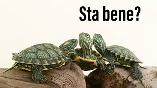 come capire se la tua tartaruga sta bene???
