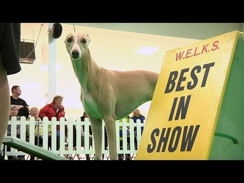 WELKS Dog Show 2016 - Best in Show