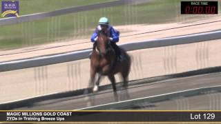 Lot 129 - 2YOs in Training Breezeup Thumbnail