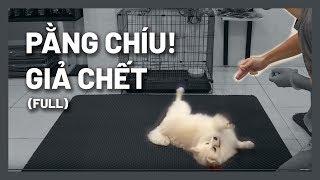 Cách huấn luyện chó | Lệnh giả chết - Hướng dẫn cнi tiết dễ làm | BoṡṡDog (Dog training)