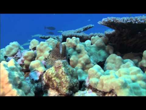 Marine defaunation: Animal loss in the global ocean