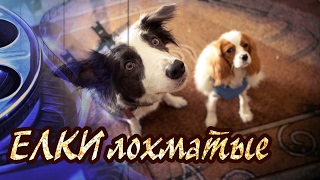 Dominika - Обзор фильма Ёлки Лохматые